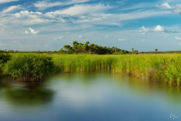 Constance Mier Photography - beautiful Florida nature scenes