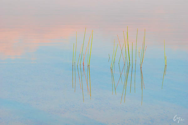 Constance Mier Photography - fine art prints of intimate waterscapes captured in beautiful Florida wilderness