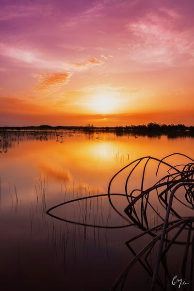 Constance Mier Photography - stunning images of Florida nature scenes