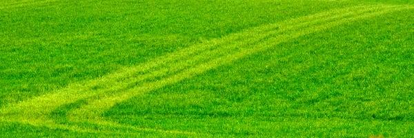 Spring Field Tracks