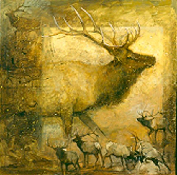 An Elk Story