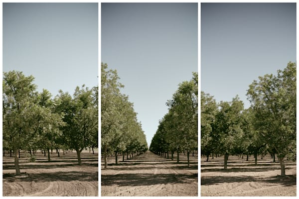 Orchard Triptych