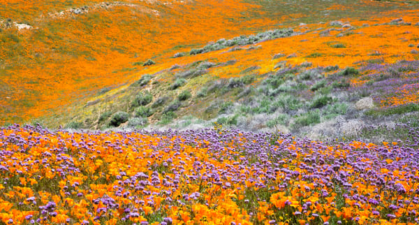 SUPER BLOOM CANYON