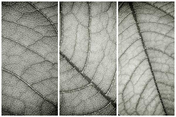 Leaf Life Photography Art | Nathan Larson Photography