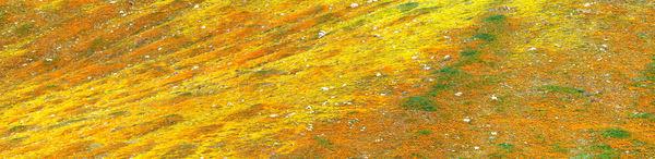FLOWERING PANORAMA