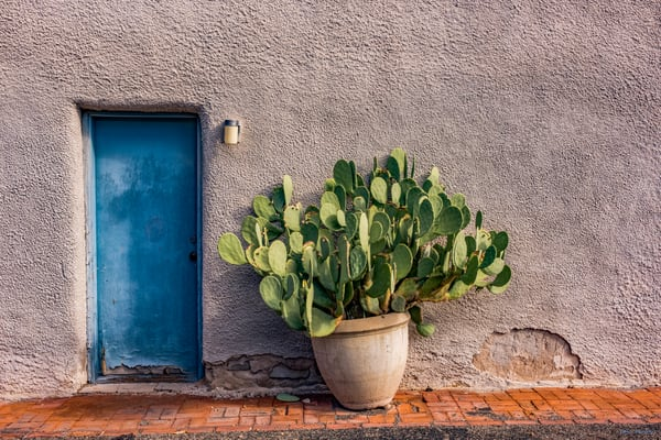 DP605 Door & Prickly Pear