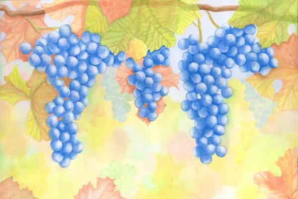 wine-theme