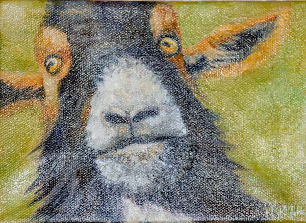 This is a painting billy goat named Milton