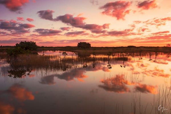 Constance Mier Photography - stunning Everglades waterscapes