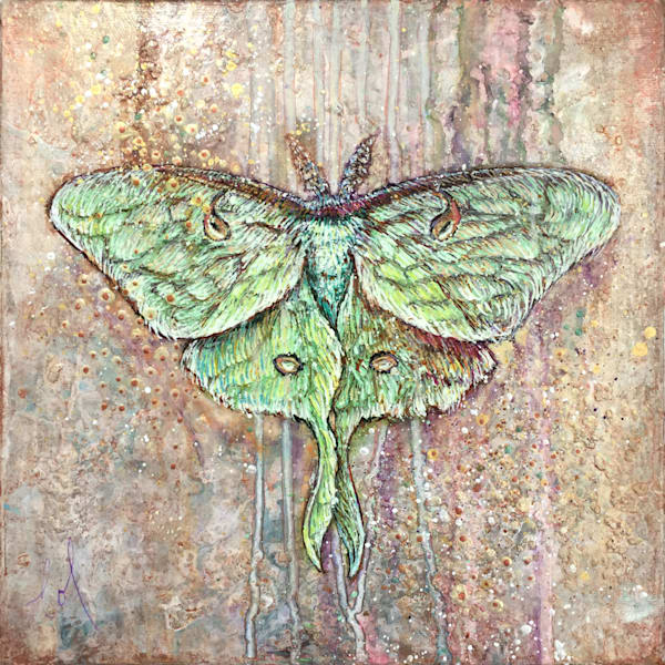 Light Guided: Luna (moth)