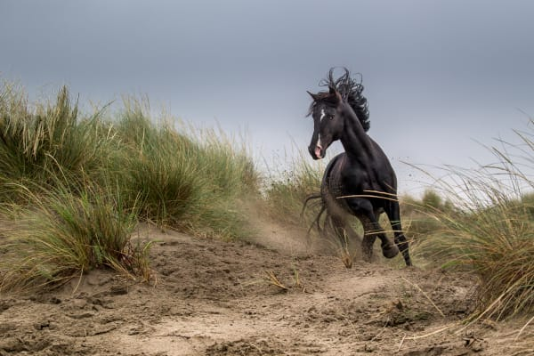 Black horse on a hill