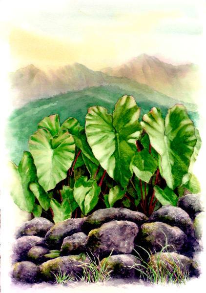 Hawaii Fine Art   Kalo Hanalei by Philip Sabado
