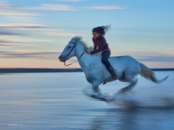 France - Wild White Horses