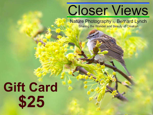 $25 Gift Card | Closer Views Photography