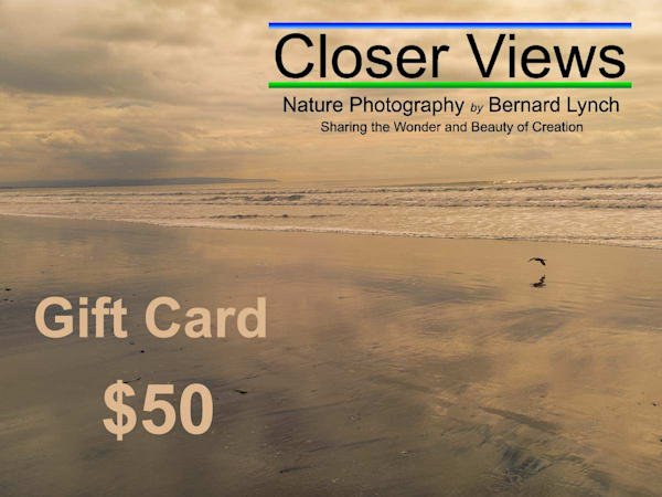 $50 Gift Card | Closer Views Photography