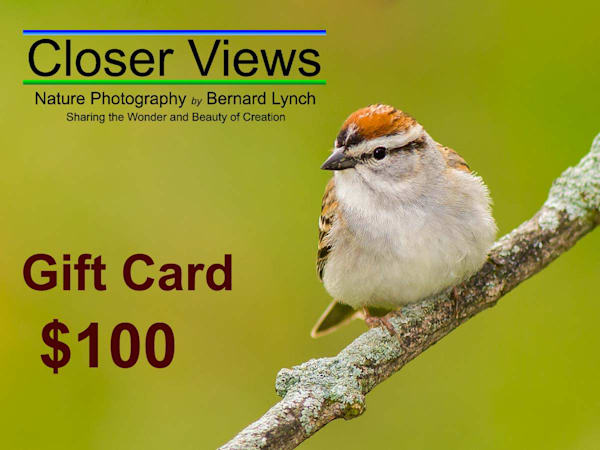 $100 Gift Card | Closer Views Photography