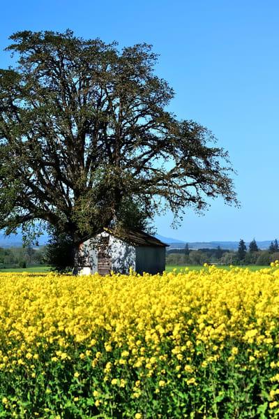 Willamette Valley Spring Crop