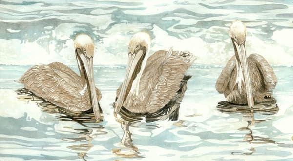 Pelican II - A Sandra Galloway watercolor  print on gallery wrapped canvas of three pelicans and their reflection in the water