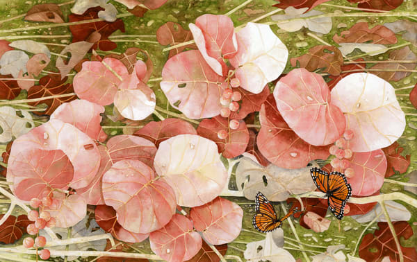Print from a watercolor painting by artist Sandra Galloway of Coral-colored sea grapes attracting Monarch butterflies. Printed on gallery-wrapped canvas.