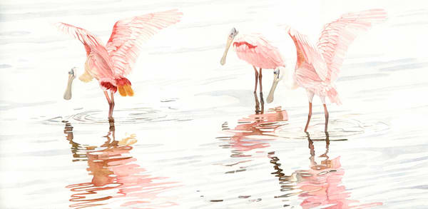 A watercolor print on gallery wrapped canvas by Sandra Galloway  of a trio of spoonbills and their reflection on the water