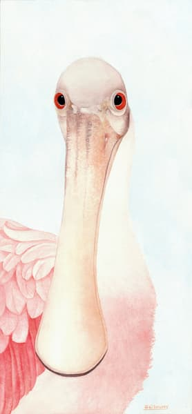 Detailed, close-up print of a watercolor painting of a face of Spoonbill, by Sandra Galloway.  Printed on gallery-wrapped canvas