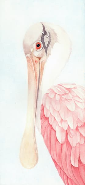 Detailed, close-up watercolor painting of the profile of a Spoonbill, by Sandra Galloway.  Printed on gallery-wrapped canvas.