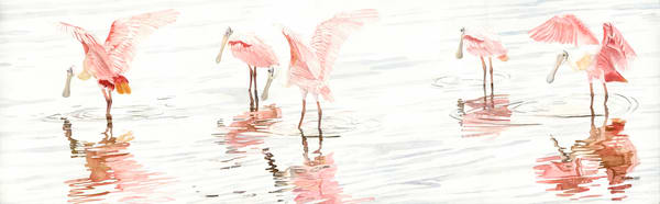 A watercolor print on gallery wrapped canvas by Sandra Galloway  of a flock of spoonbills and their reflections in the water