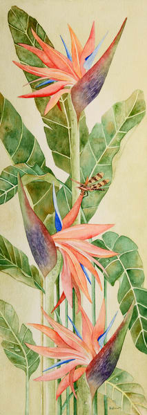 Print from a watercolor painting by artist Sandra Galloway of an orange bird of paradise plant with a dragonfly among the blossoms. Printed on stretched canvas.