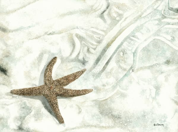 A print on stretched canvas by watercolor artist Sandra Galloway of a Starfish making its way across the beach making patterns in the sand.