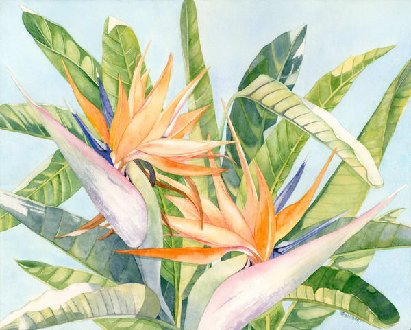 Print from a watercolor painting by artist Sandra Galloway of an orange bird of paradise viewing from up-close. Printed on stretched canvas.
