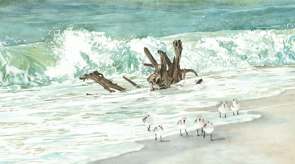 Print from a watercolor painting by Sandra Galloway of sandpipers walking along a beach with driftwood in the surf. Printed on stretched canvas.