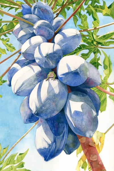 A print on stretched canvas painted as if looking up a blue-colored papaya tree.  Original artwork done in watercolor by artist Sandra Galloway