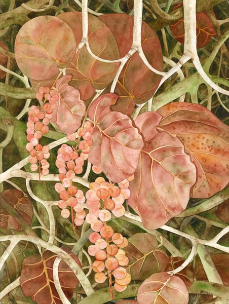 A watercolor print on stretched canvas by artist Sandra Galloway of coral-colored sea grapes.