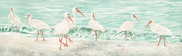 A Watercolor of a flock of seven Ibis walking along the beach,  by artist Sandra Galloway. Printed on stretched canvas.