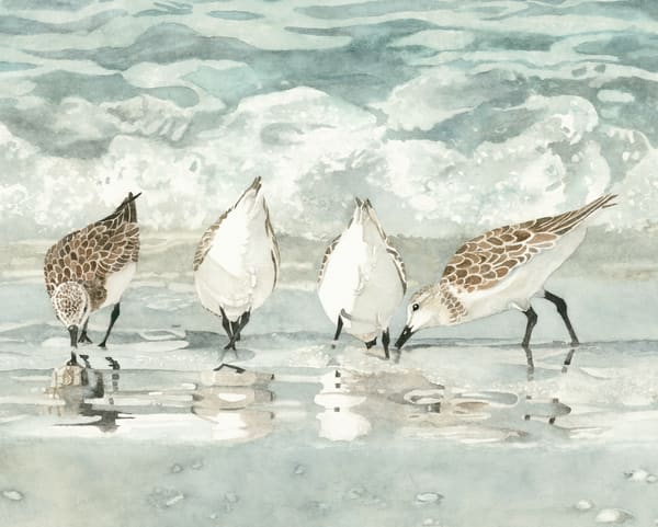 Watercolor of four sandpipers on the beach by artist Sandra Galloway. Print available on stretched canvas