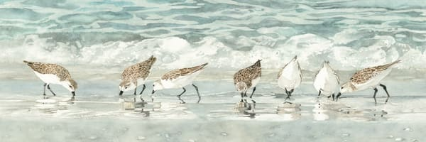 A detailed print on stretched canvas, depicting seven sandpipers on the beach, by watercolor artist Sandy Galloway.