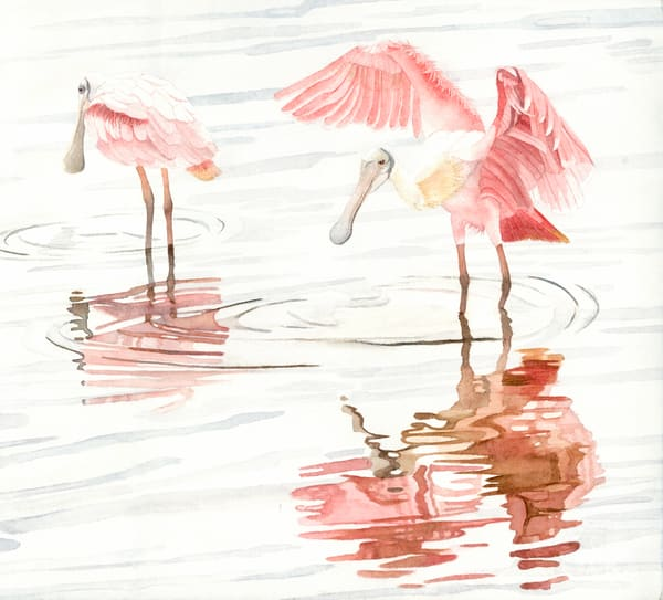 A Sandra Galloway watercolor print on stretched canvas of two spoonbills and their reflection on the water