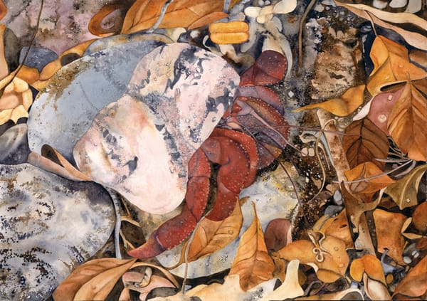 A Print of a watercolor painting by artist Sandra Galloway of a Soldier Crab coming out of its shell among fall-colored leaves. Printed on stretched canvas