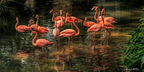 pink, flamingo, pink-flamingo, zoo, san-antonio, reflection, water