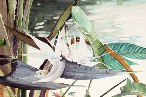 A print on stretched canvas by watercolor artist Sandra Galloway of an up-close view of a White Bird of Paradise