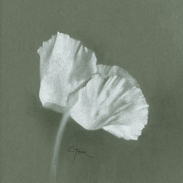 Poppy, White Fan