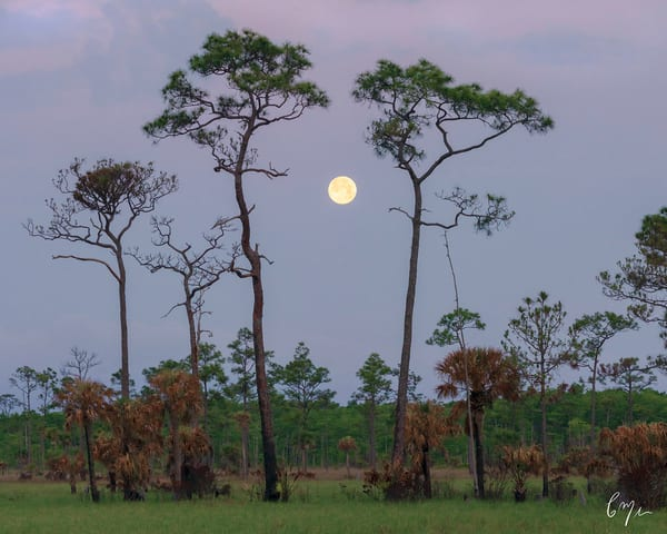Constance Mier Photography - stunning Florida landscapes in the Everglades