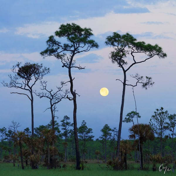Constance Mier Photography - wild and beautiful scenes from Florida Everglades