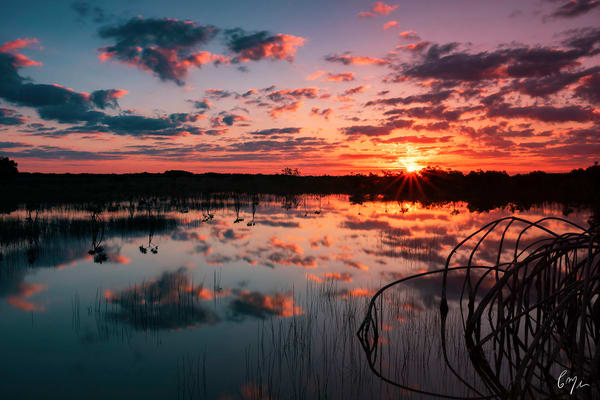 Constance Mier fine art nature photography - stunning scenes from Florida's wilderness areas