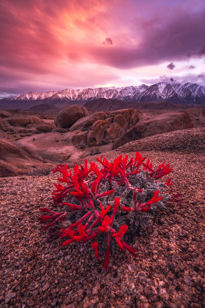 'Paintbrushes & Mountains' Photograph by Jess Santos for sale as Fine Art