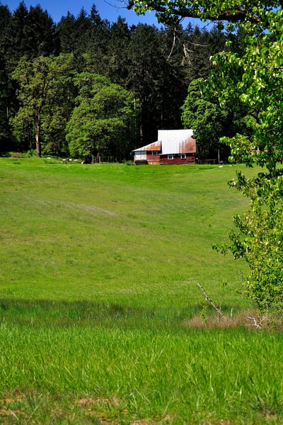 Old Barn in a Willamette Valley Pasture