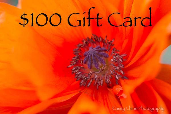 $100 Gift Card | Casey Chinn Photography LLC