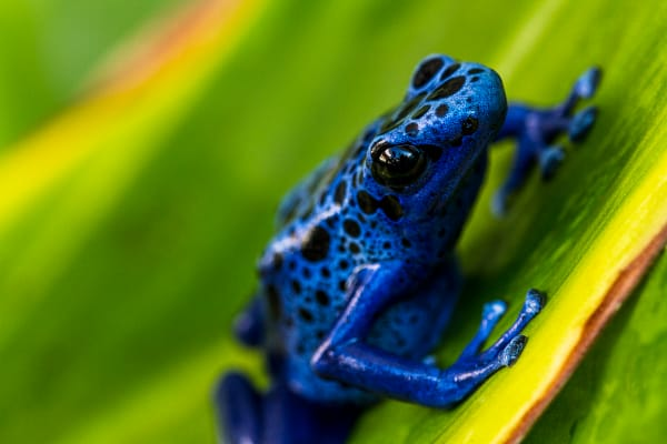 Amphibian Photographs For Sale As Fine Art