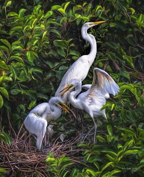 The Great Nest of the White Egrets