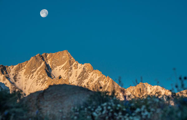 From The Wildflowers To The Moon  Photography Art | David N . Braun Photography